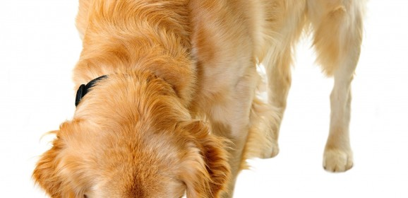 How to Compare Dry, Moist and Wet Dog Foods